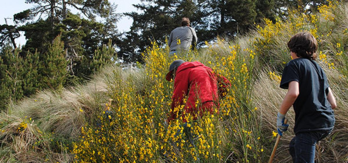 scotch broom on an Oregon hillside, photo by USFS