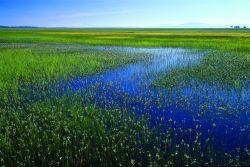 photo of Oregon wetlands