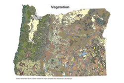 example vegetation map